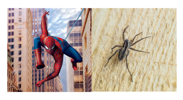 蜘蛛侠22.jpg