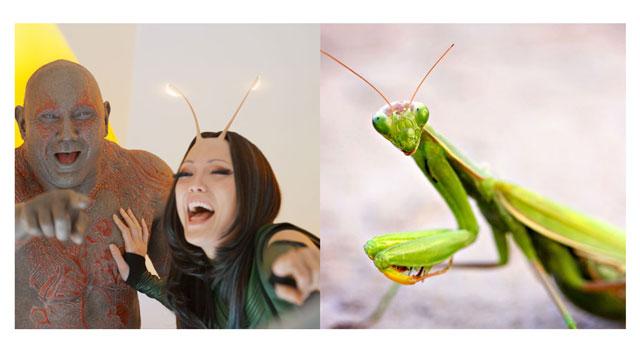 螳螂22.jpg