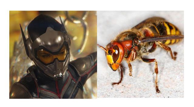 黄蜂1.jpg