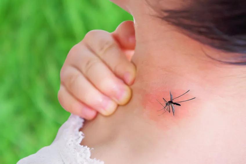 蚊子:我就尝一小口,你咋还倒了呢? 美容 第2张